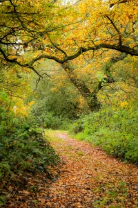 autumn colours on a path at Alvecote Wood