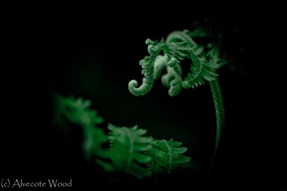 Alien bracken frond