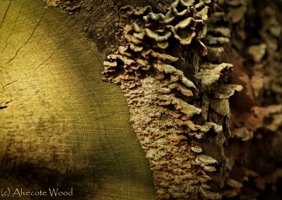 Fungi on log