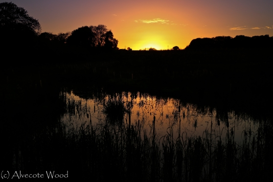 Sunset over Betty's Wood Ponds