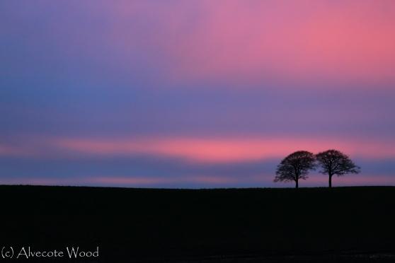 A pastel pink sky
