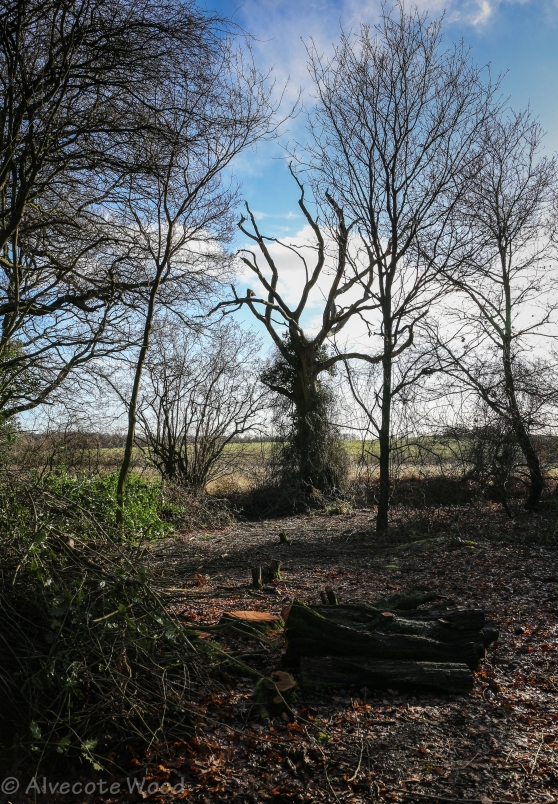 This year's coppice