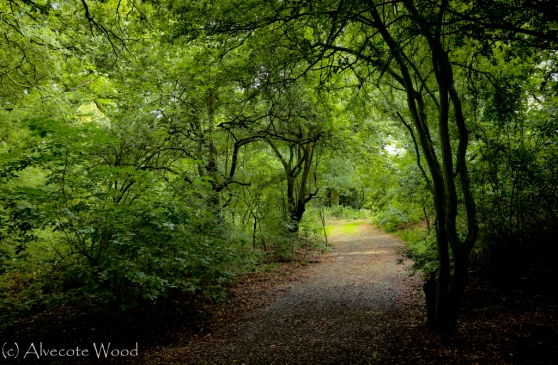 Irreplaceable ancient woodland