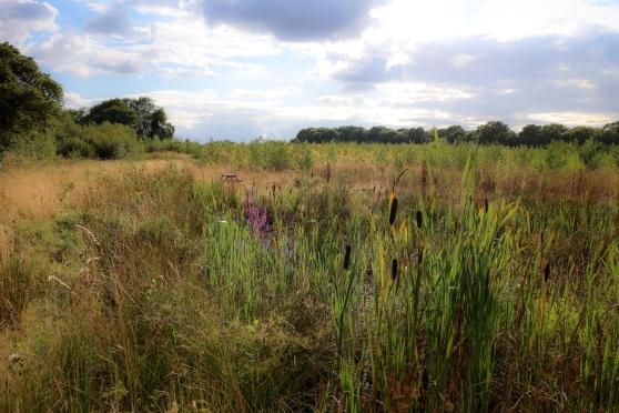 Ponds are now vegetation rich