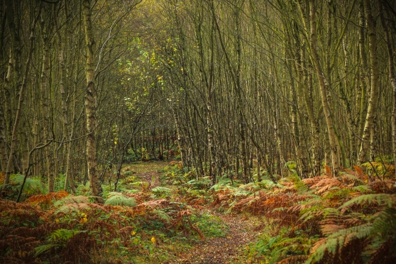 Woodland Path at Hopwas Woods