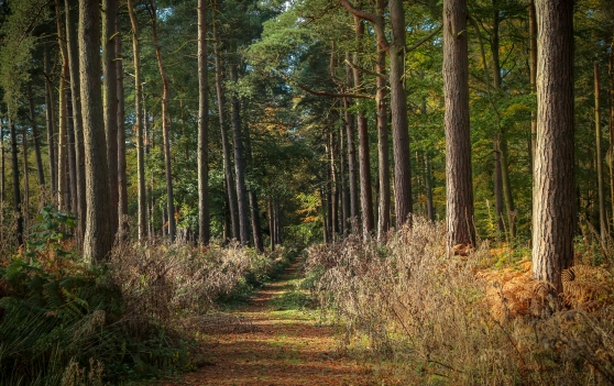 Stunning Woodland View at Hopwas Woods