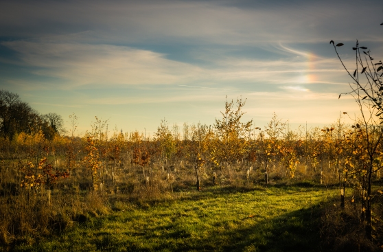 Sun Dog over Betty's Wood - the rainbow is not a photographic artefact