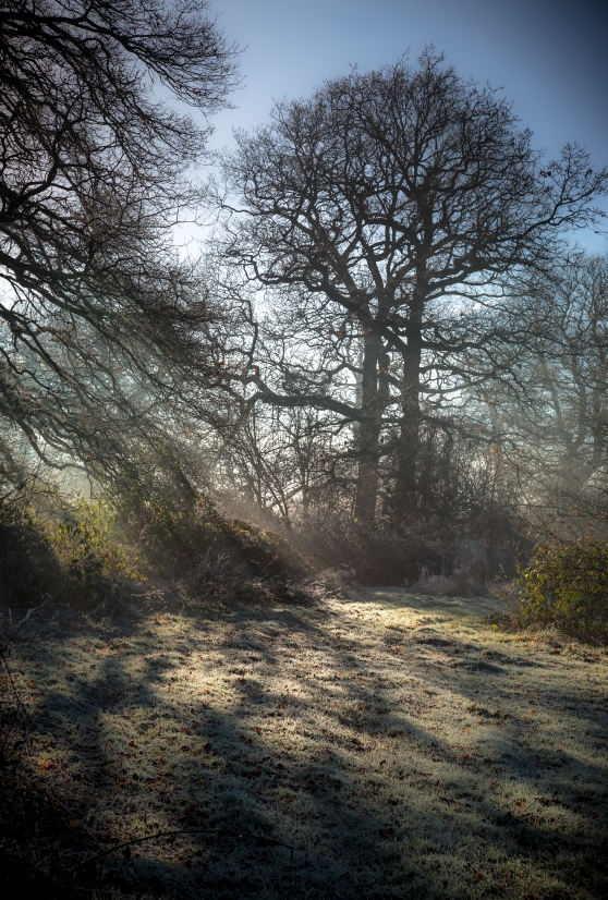 Frost Mist Trees and Shadows