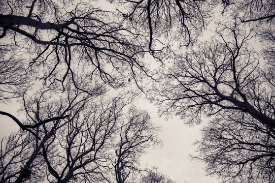Winter tree canopy