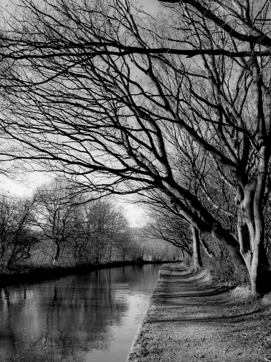 Canal trees in winter