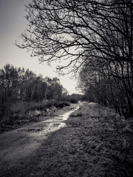 Wet Path at Claybrook Marsh
