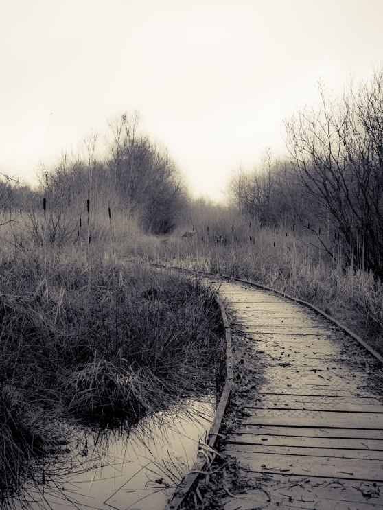 Boardwalk at Claybrook Marsh
