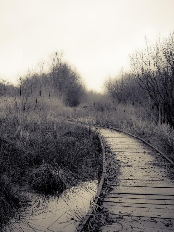 Boardwalk at Claybrook Marsh