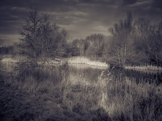 Ray of Light on local ponds - OMD EM-1 with 12-40 f2.8 Pro