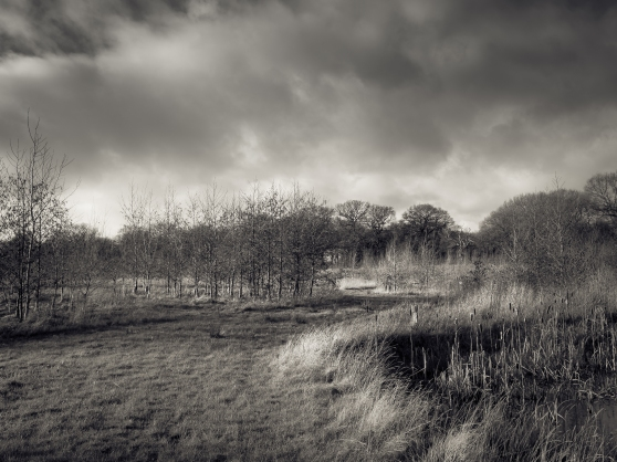 Sunshine and Showers over Betty's Wood
