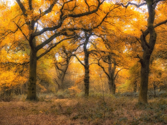 The main oak glade in our woods in the autumn